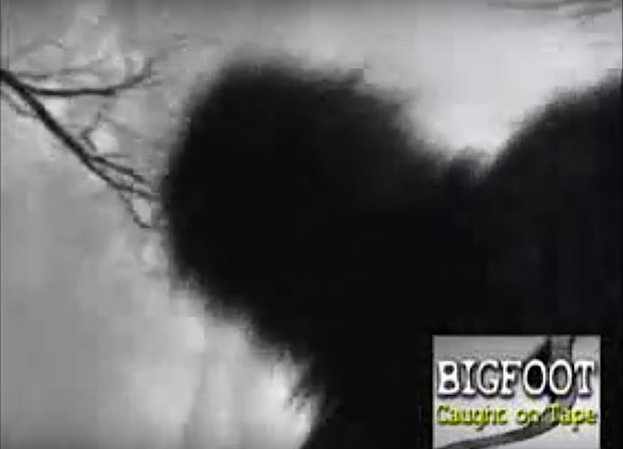 A scene from the movie Bigfoot Caught on Tape